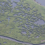 It is said that 95 percent of all Gulf marine life spends at least a portion of its existence in Louisiana bays and estuaries making this area critical for the entire Gulf region. Sensitive fish habitat like the saltwater marsh pictured here in Barataria Bay are especially vulnerable to oil leaks. Photo: Jonathan Henderson, Vanishing Earth.